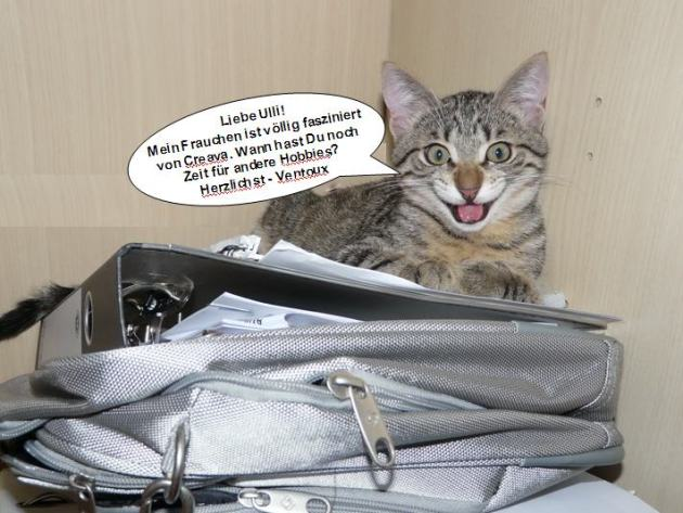 Katze Chris