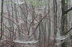 Spinnennetze 2