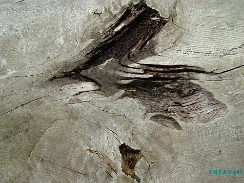 Kunst im Baum