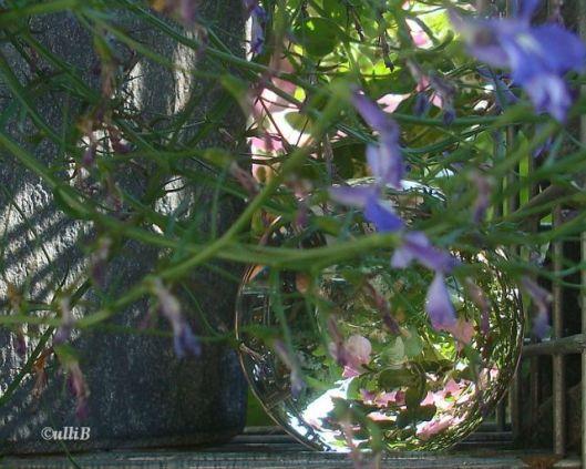 Glaskugel im Sommergarten kc
