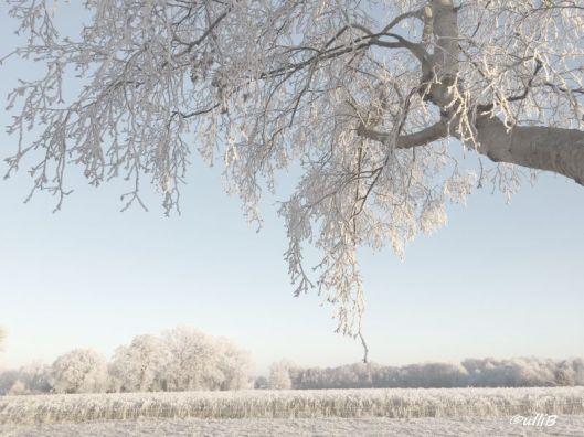 wintermorgen-c